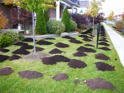 Compost Versus Sand Topdressing for Lawn Leveling