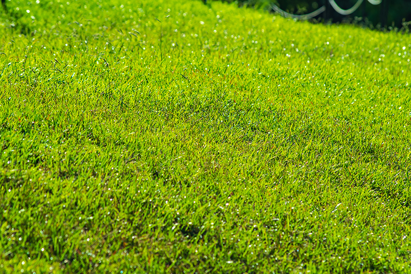 3 Reason to Consider Re-Grading Your Lawn