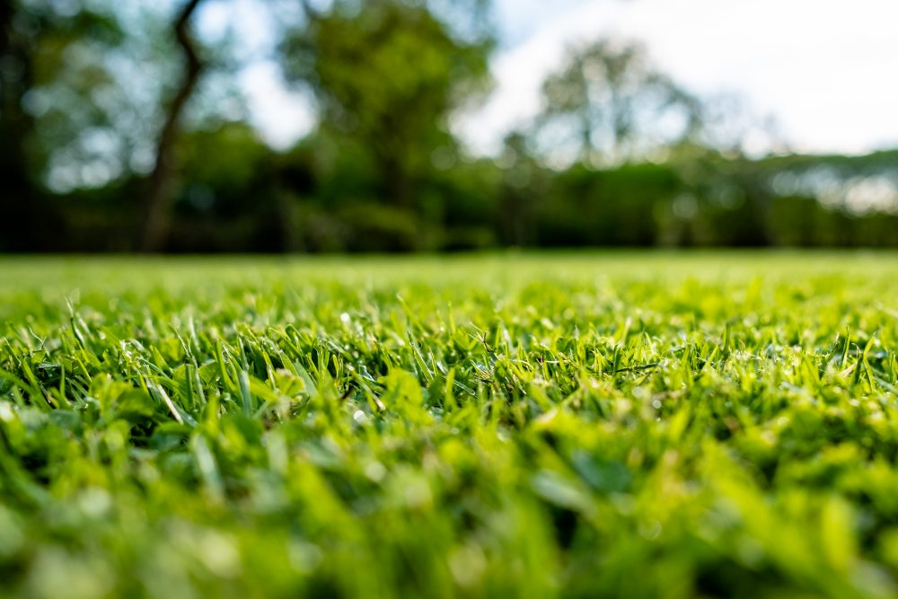 3 Unexpected Benefits of Topdressing
